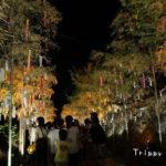 8月7日(火)京の七夕と二条城ライトアップ
