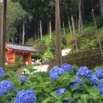 6月21日(水)三室戸寺の紫陽花、世界遺産・宇治上神社、薬膳ランチの旅