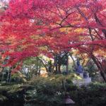 【ご案内】11月20日(火)24日(土)錦秋の京都と和と仏が融合した空間でフレンチを楽しむ旅