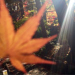 【ご案内】11月14日(水)小さい秋見つけ旅〈ショートコース〉